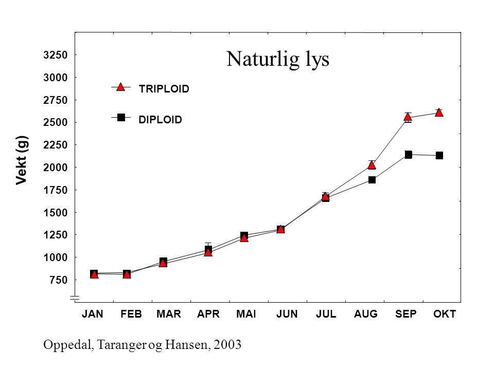 Naturlig lys Vekt (g) Oppedal, Taranger og Hansen, 2003 3250 3000