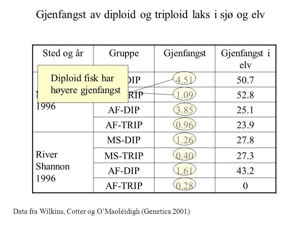 Gjenfangst av diploid og triploid laks i sjø og elv
