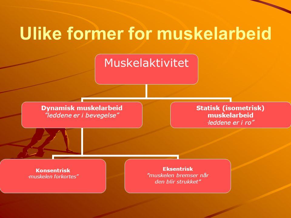 Ulike former for muskelarbeid