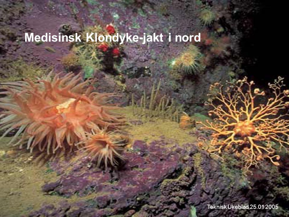 Medisinsk Klondyke-jakt i nord