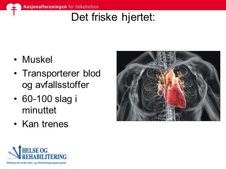 Det friske hjertet: Muskel Transporterer blod og avfallsstoffer