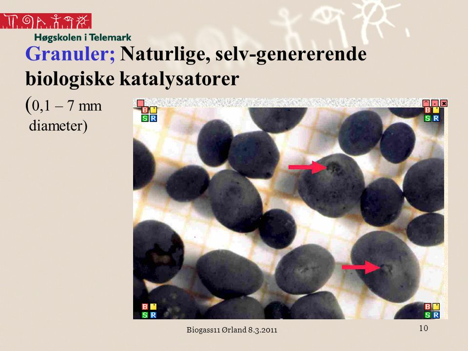 Granuler; Naturlige, selv-genererende biologiske katalysatorer (0,1 – 7 mm diameter)