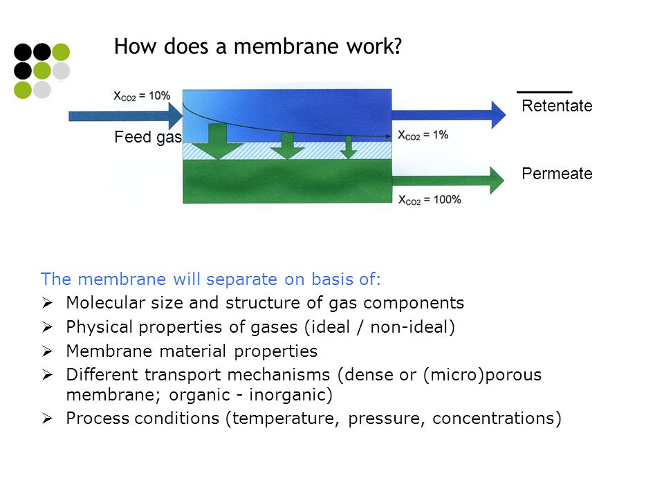 How does a membrane work