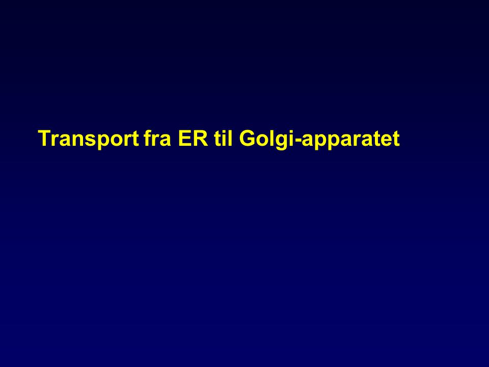 Transport fra ER til Golgi-apparatet