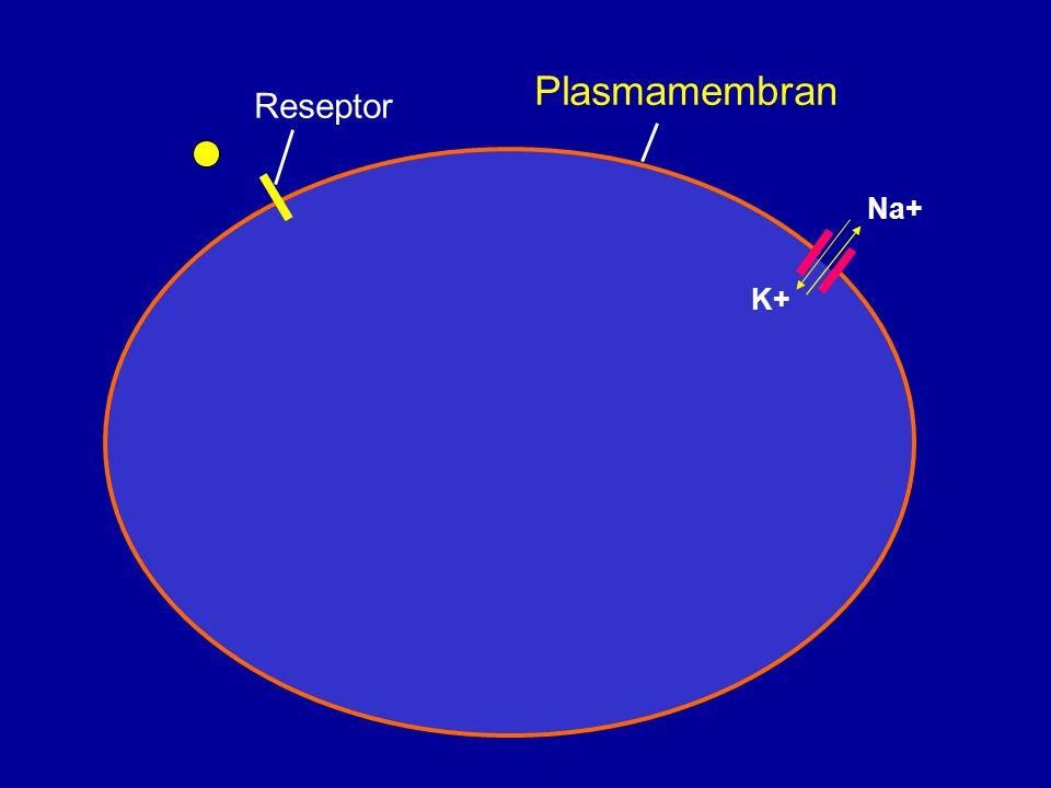 Plasmamembran Reseptor Na+ K+