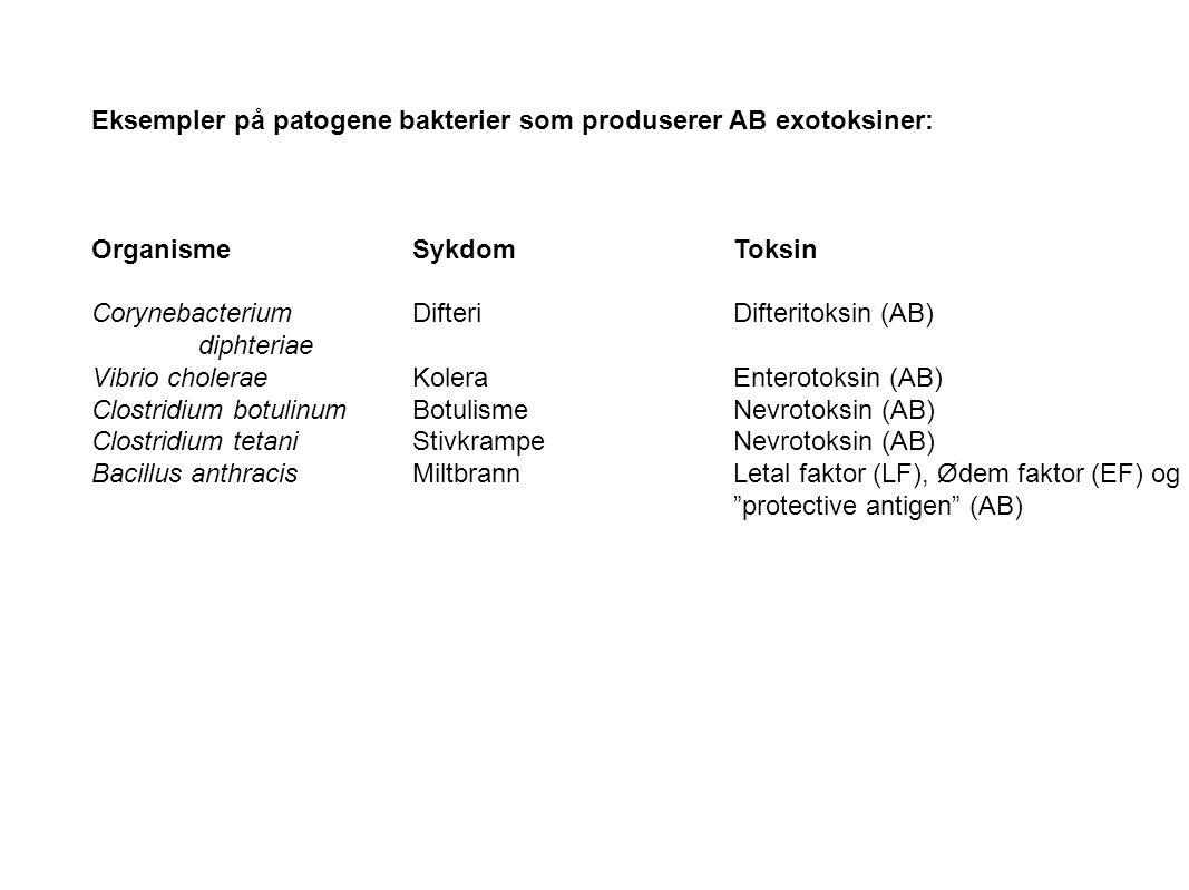 Eksempler på patogene bakterier som produserer AB exotoksiner: