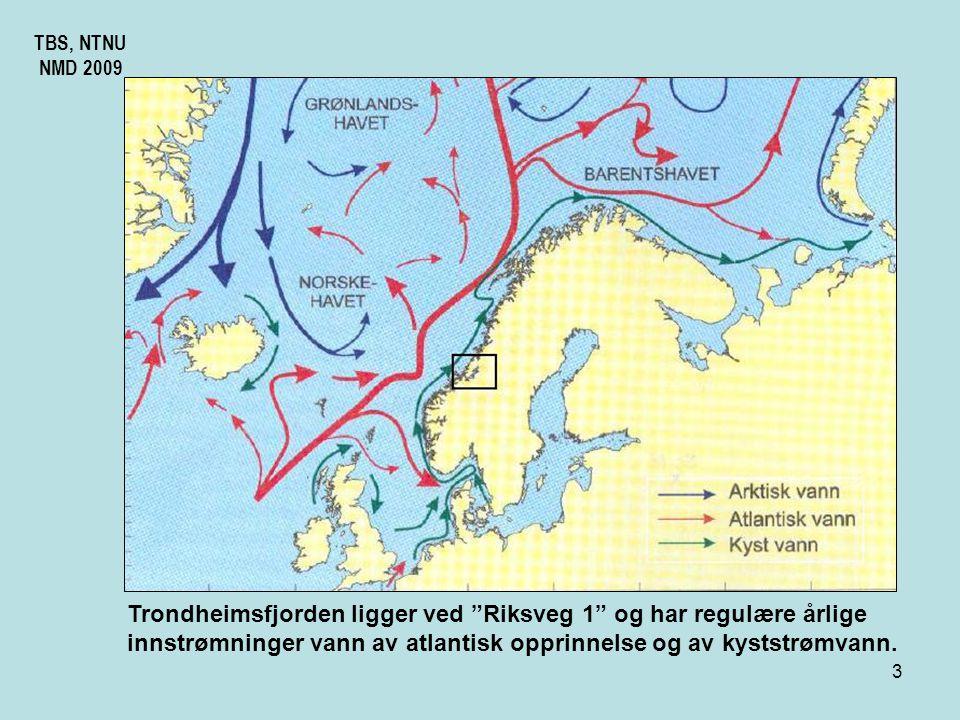 Trondheimsfjorden ligger ved Riksveg 1 og har regulære årlige