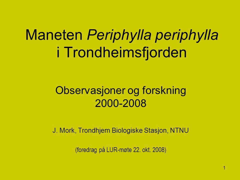 Maneten Periphylla periphylla i Trondheimsfjorden