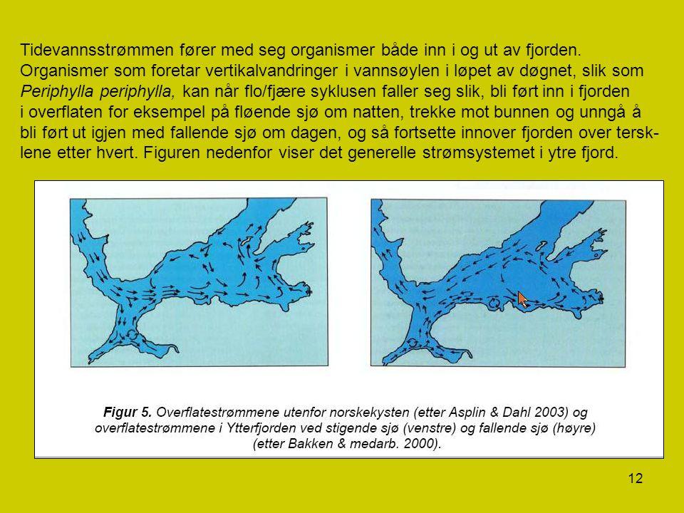 Tidevannsstrømmen fører med seg organismer både inn i og ut av fjorden.