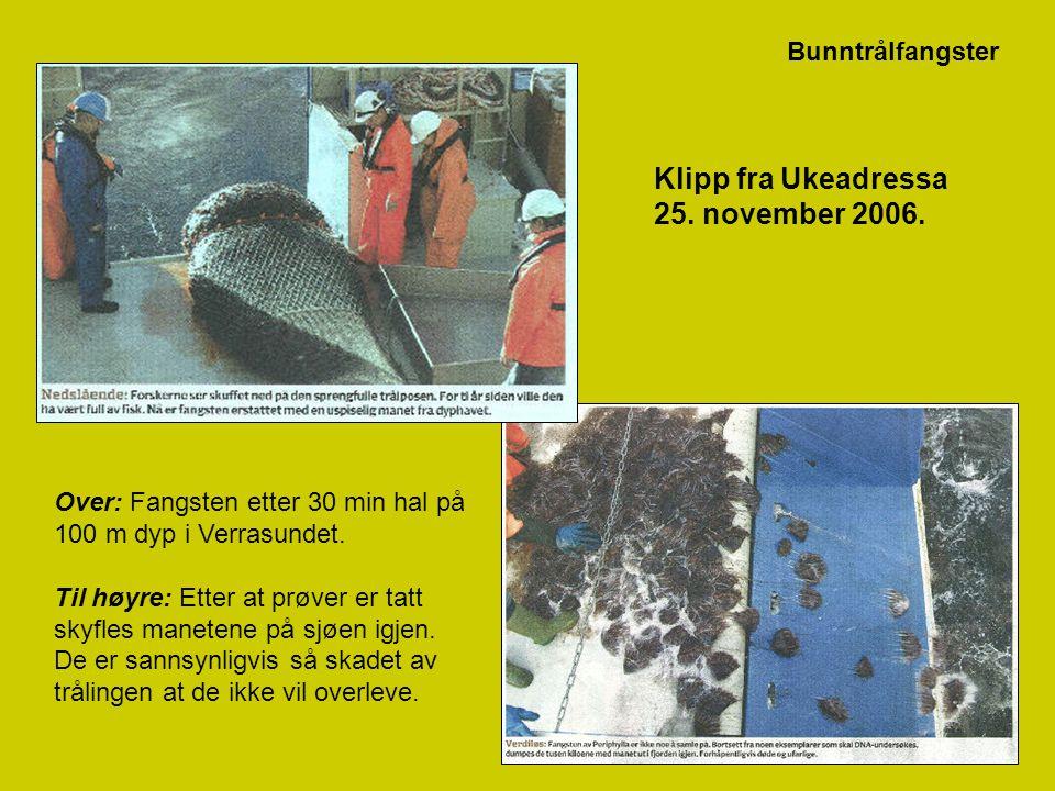 Klipp fra Ukeadressa 25. november 2006. Bunntrålfangster