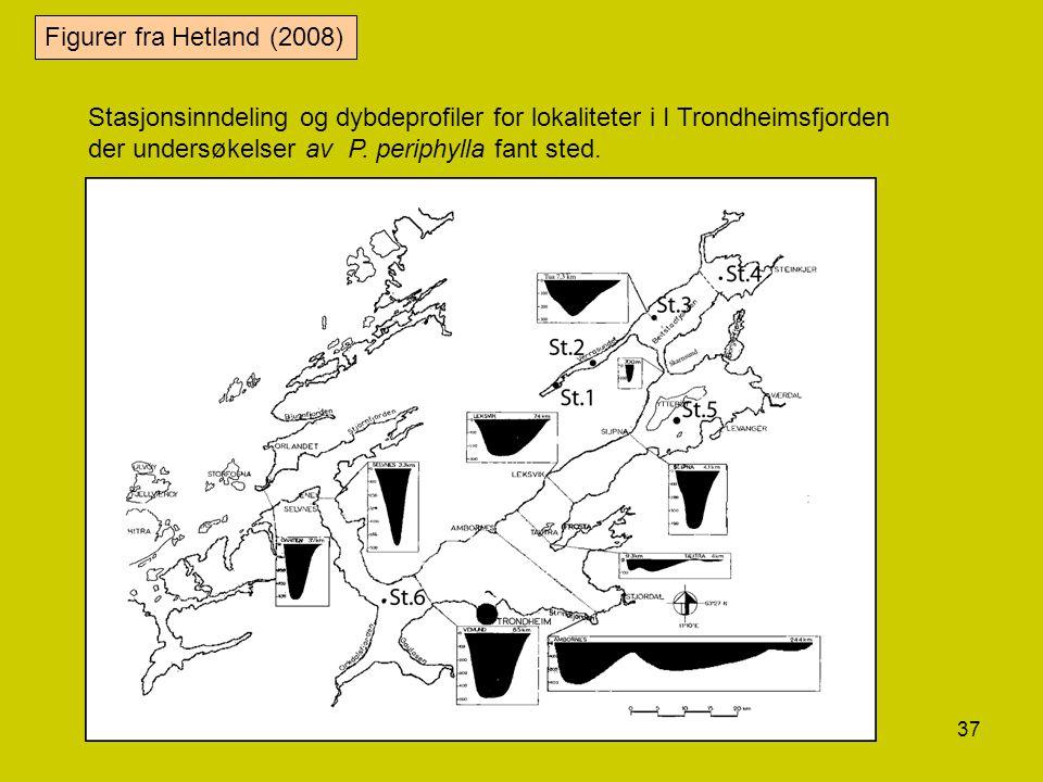 Figurer fra Hetland (2008) Stasjonsinndeling og dybdeprofiler for lokaliteter i I Trondheimsfjorden der undersøkelser av P.