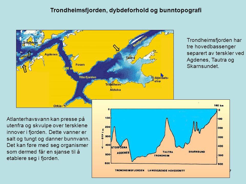 Trondheimsfjorden, dybdeforhold og bunntopografi