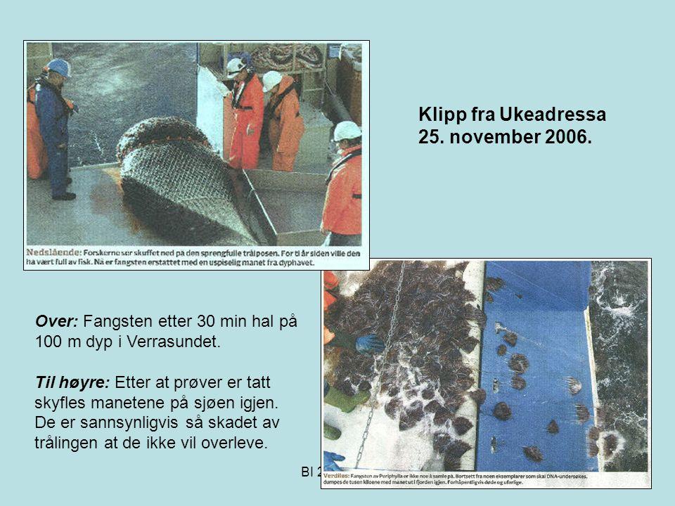 Klipp fra Ukeadressa 25. november 2006.