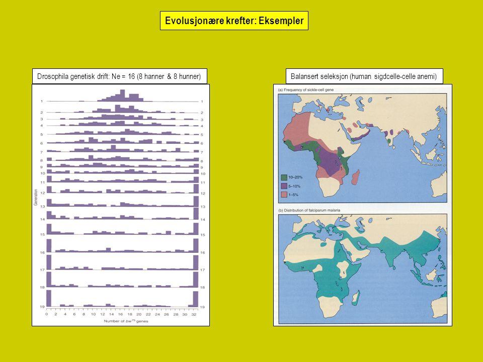 Evolusjonære krefter: Eksempler