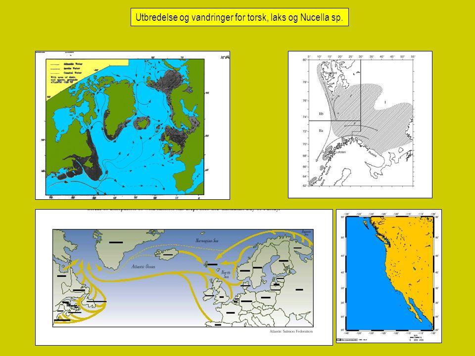 Utbredelse og vandringer for torsk, laks og Nucella sp.
