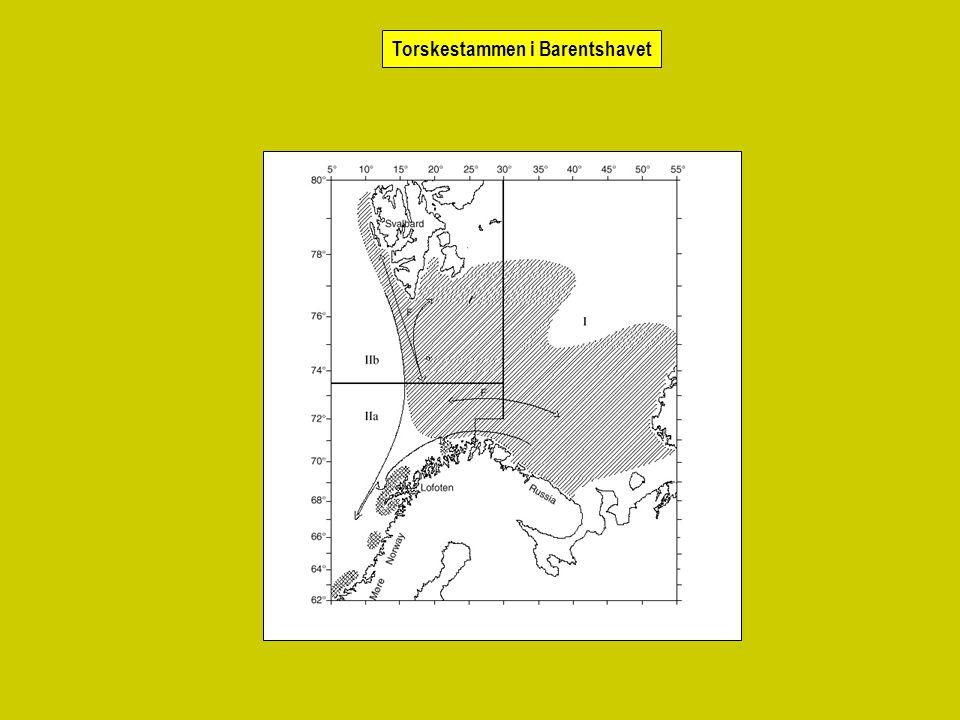 Torskestammen i Barentshavet
