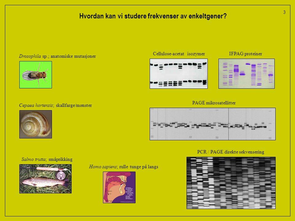 Hvordan kan vi studere frekvenser av enkeltgener