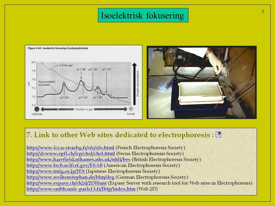 Isoelektrisk fokusering
