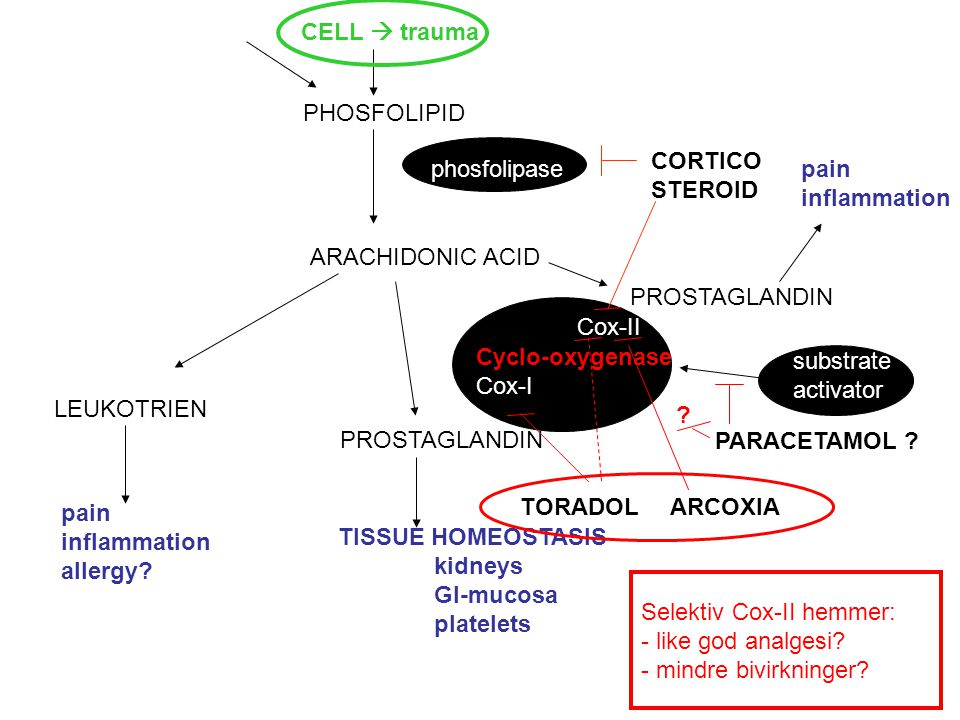 CELL  trauma PHOSFOLIPID. CORTICO. STEROID. phosfolipase. pain. inflammation. ARACHIDONIC ACID.
