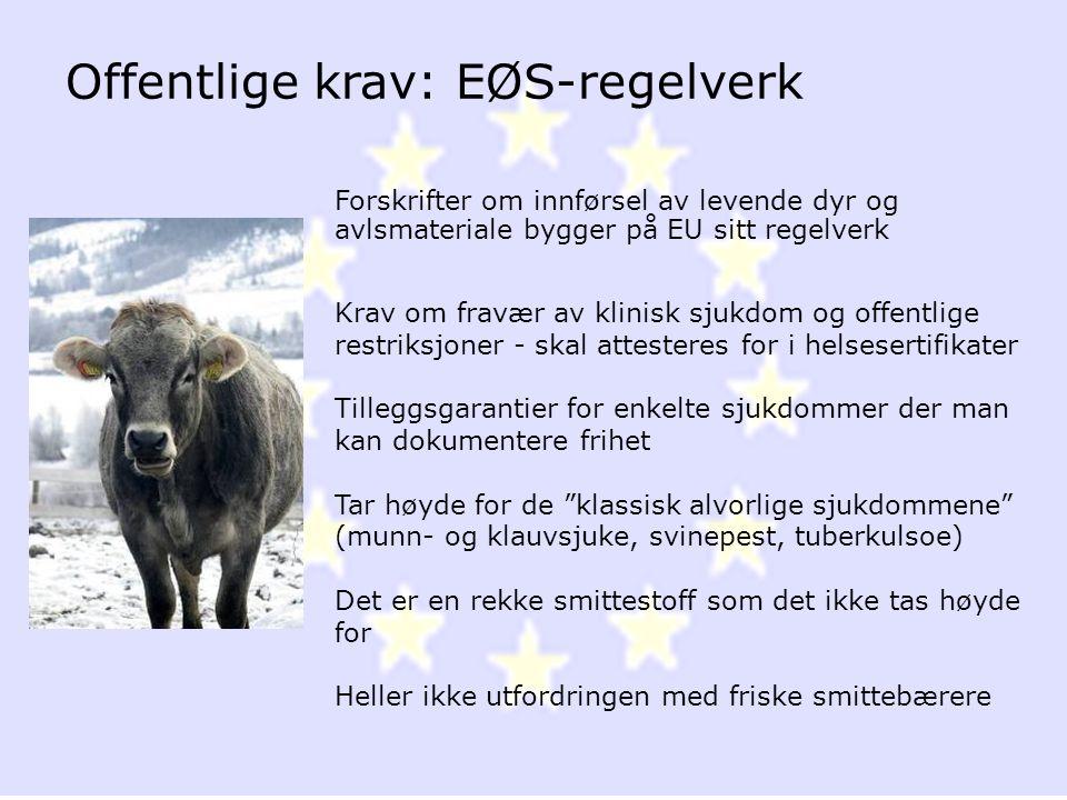 Offentlige krav: EØS-regelverk
