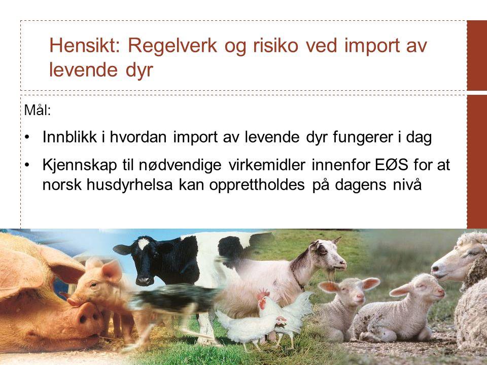 Hensikt: Regelverk og risiko ved import av levende dyr