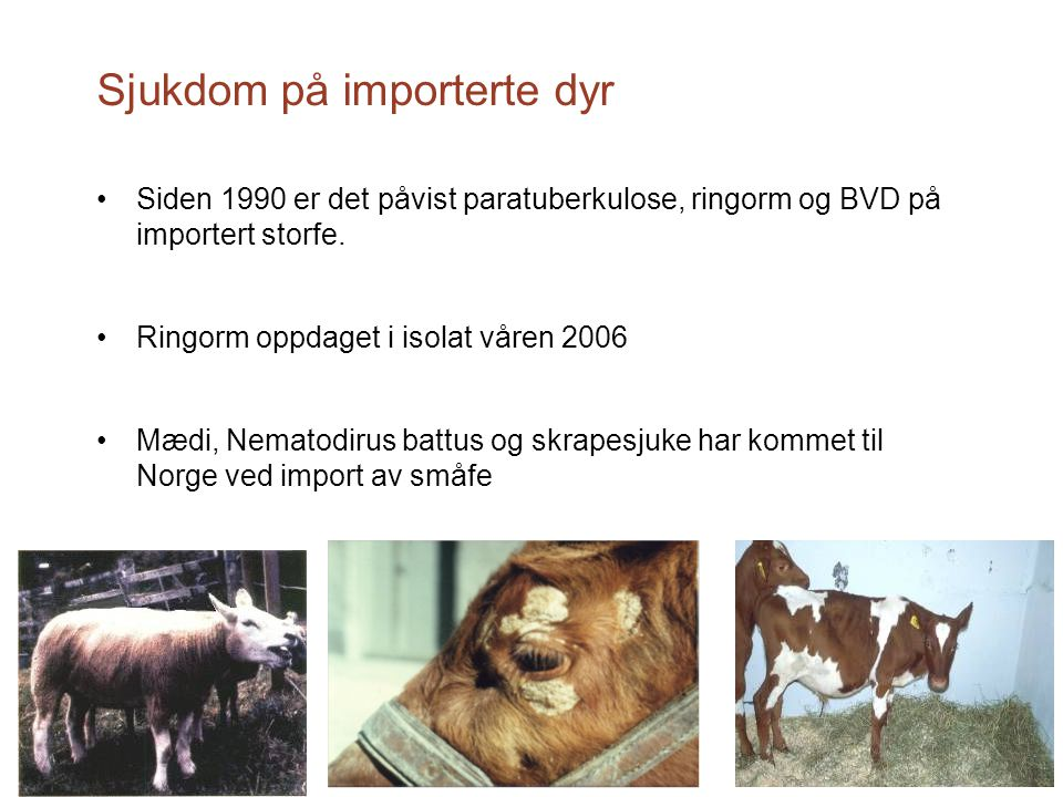 Sjukdom på importerte dyr