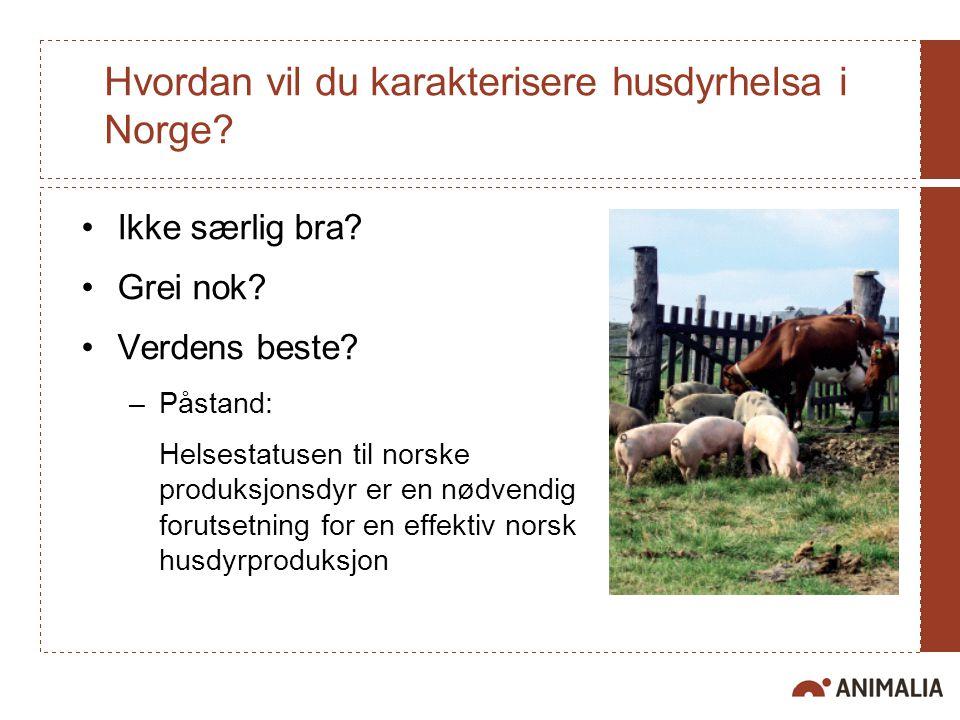 Hvordan vil du karakterisere husdyrhelsa i Norge