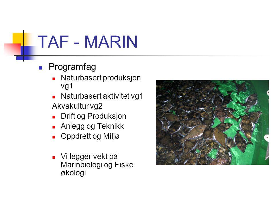 TAF - MARIN Programfag Naturbasert produksjon vg1