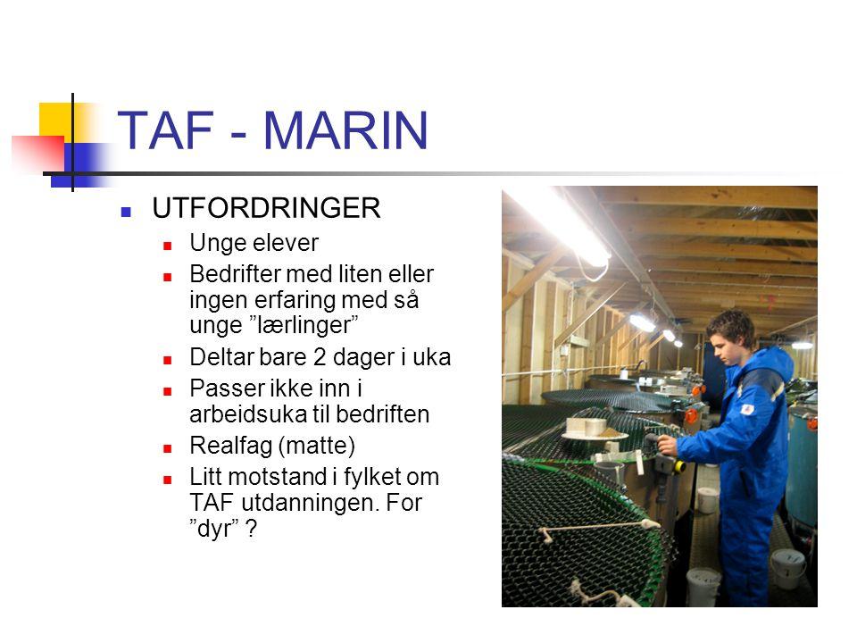 TAF - MARIN UTFORDRINGER Unge elever
