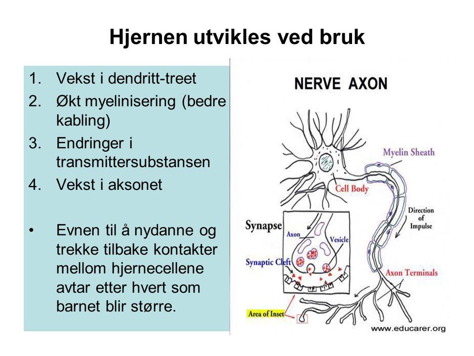 Hjernen utvikles ved bruk
