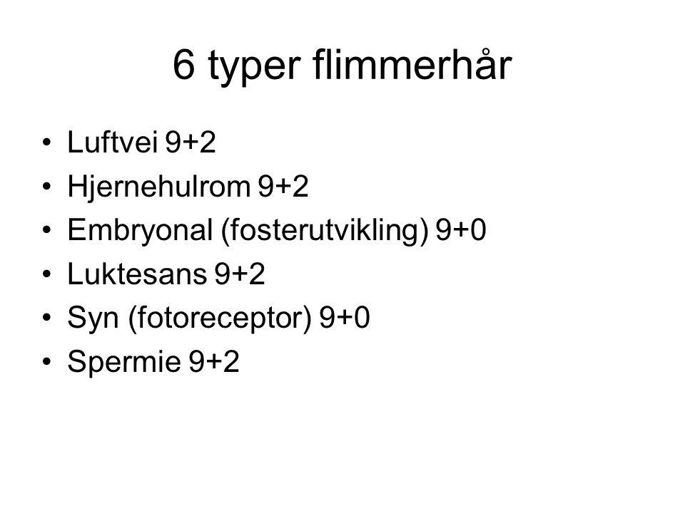 6 typer flimmerhår Luftvei 9+2 Hjernehulrom 9+2