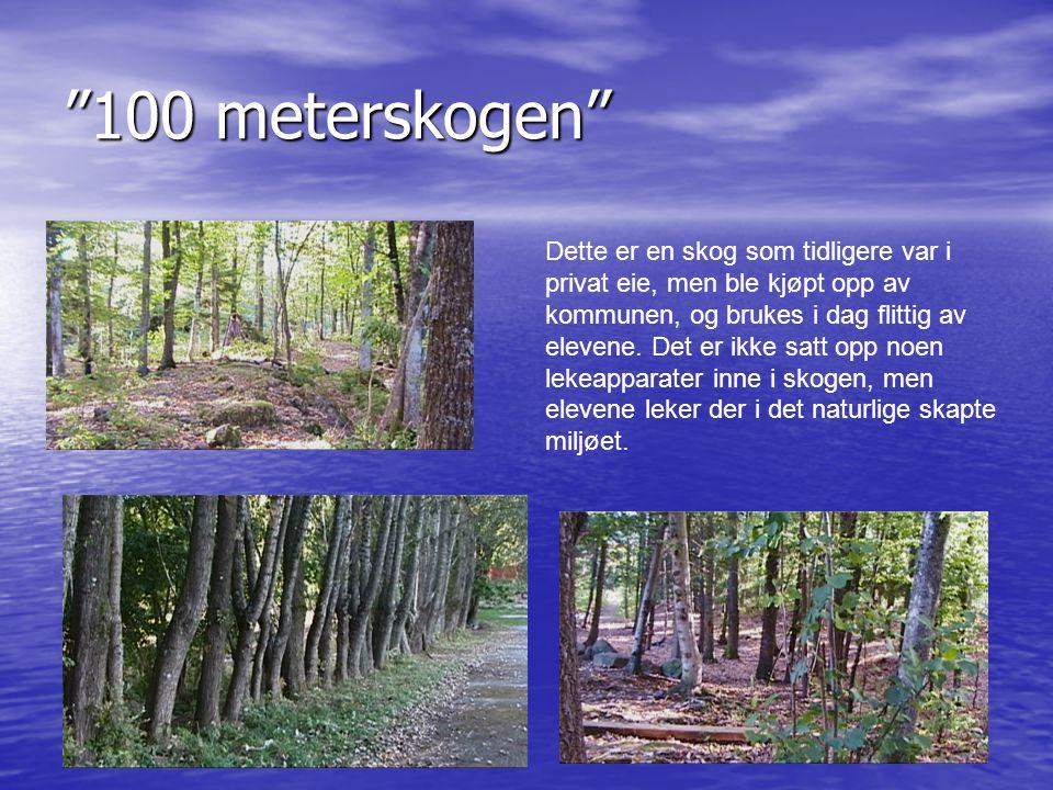 100 meterskogen