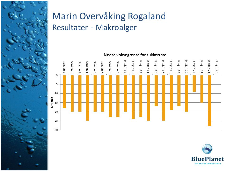 Marin Overvåking Rogaland Resultater - Makroalger
