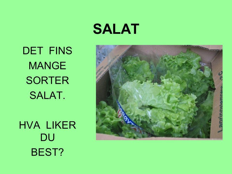 DET FINS MANGE SORTER SALAT. HVA LIKER DU BEST