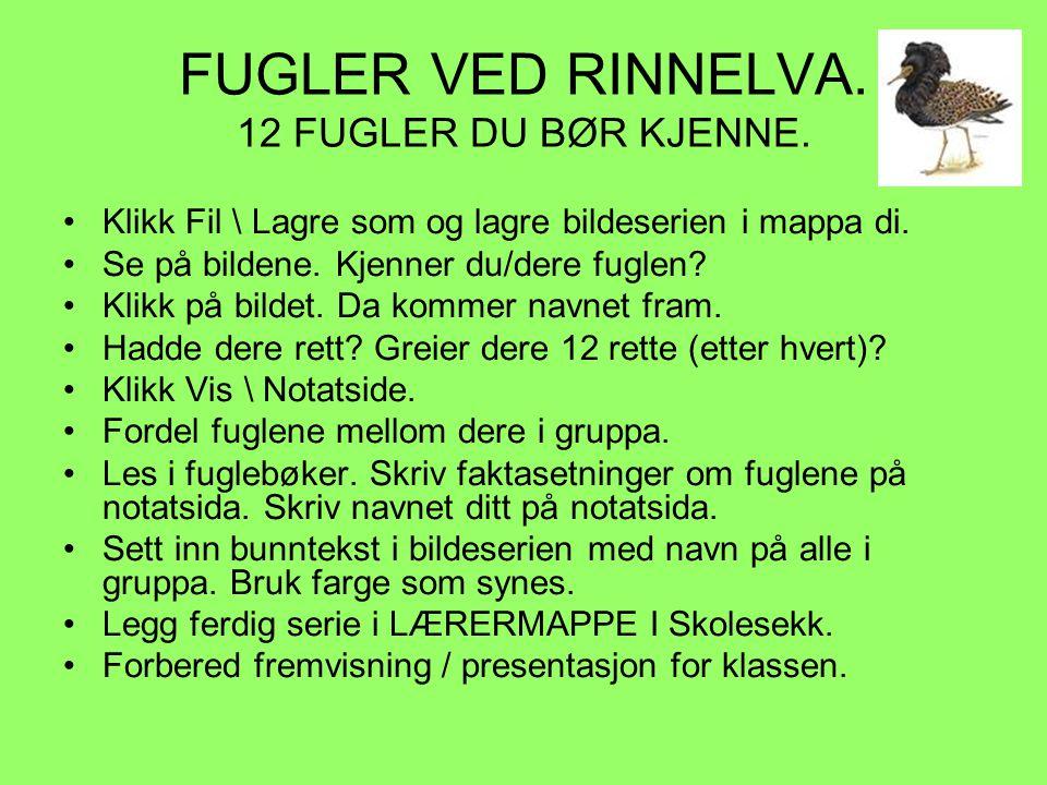 FUGLER VED RINNELVA. 12 FUGLER DU BØR KJENNE.