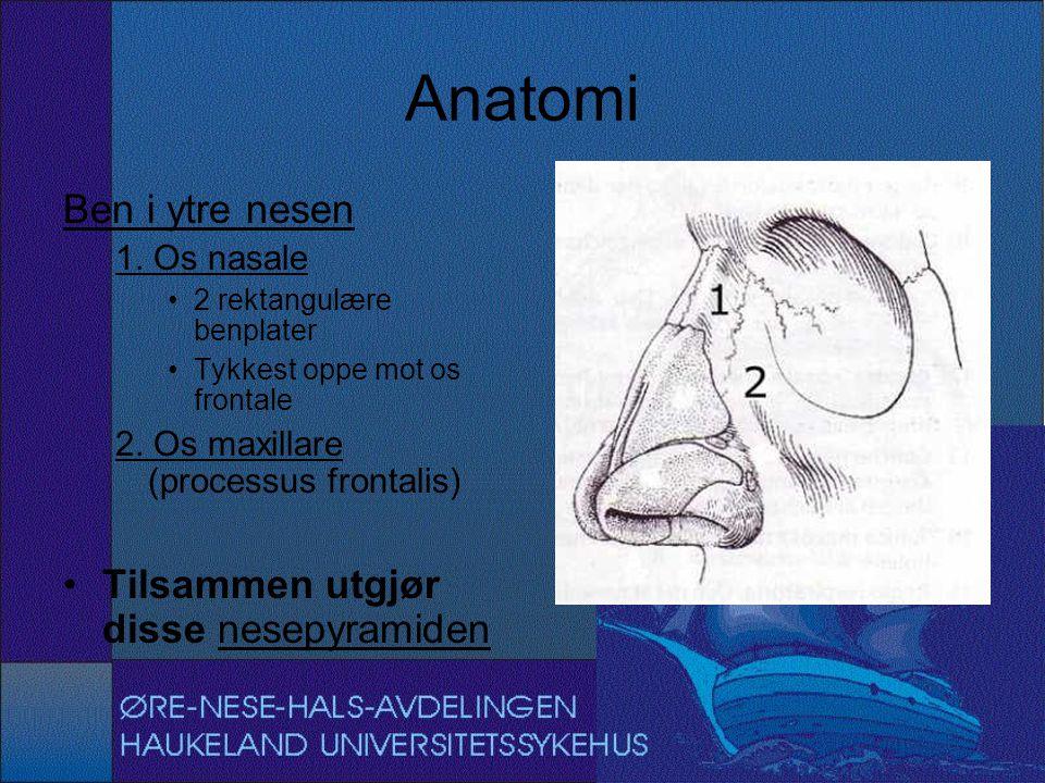 Anatomi Ben i ytre nesen Tilsammen utgjør disse nesepyramiden
