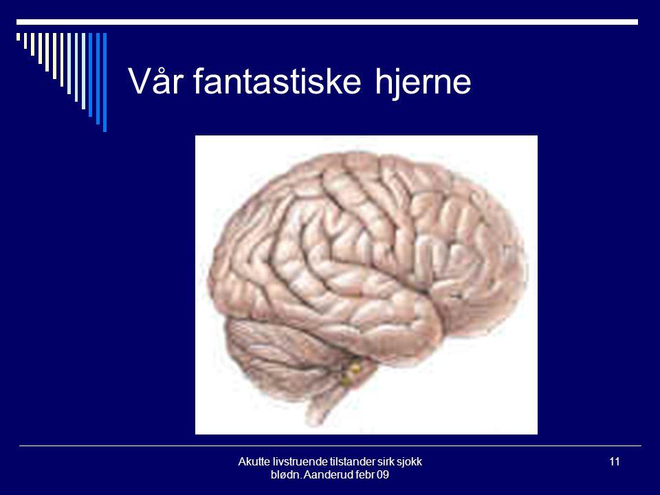 Vår fantastiske hjerne