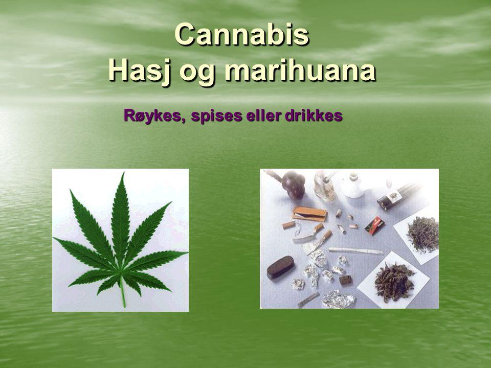 Cannabis Hasj og marihuana