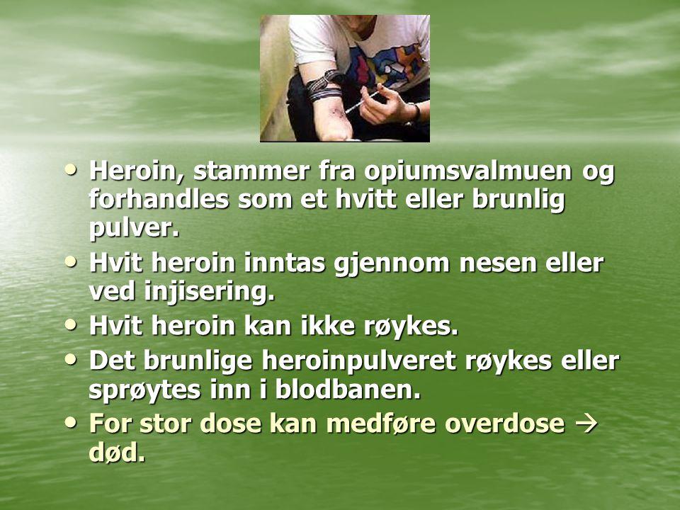 Heroin, stammer fra opiumsvalmuen og forhandles som et hvitt eller brunlig pulver.