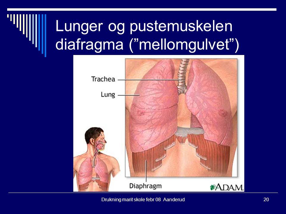 Lunger og pustemuskelen diafragma ( mellomgulvet )