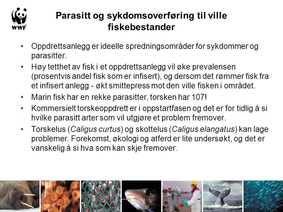 Parasitt og sykdomsoverføring til ville fiskebestander