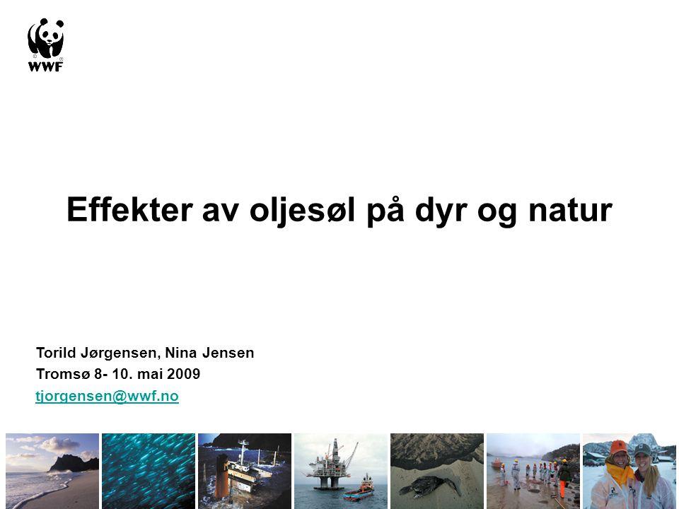 Effekter av oljesøl på dyr og natur