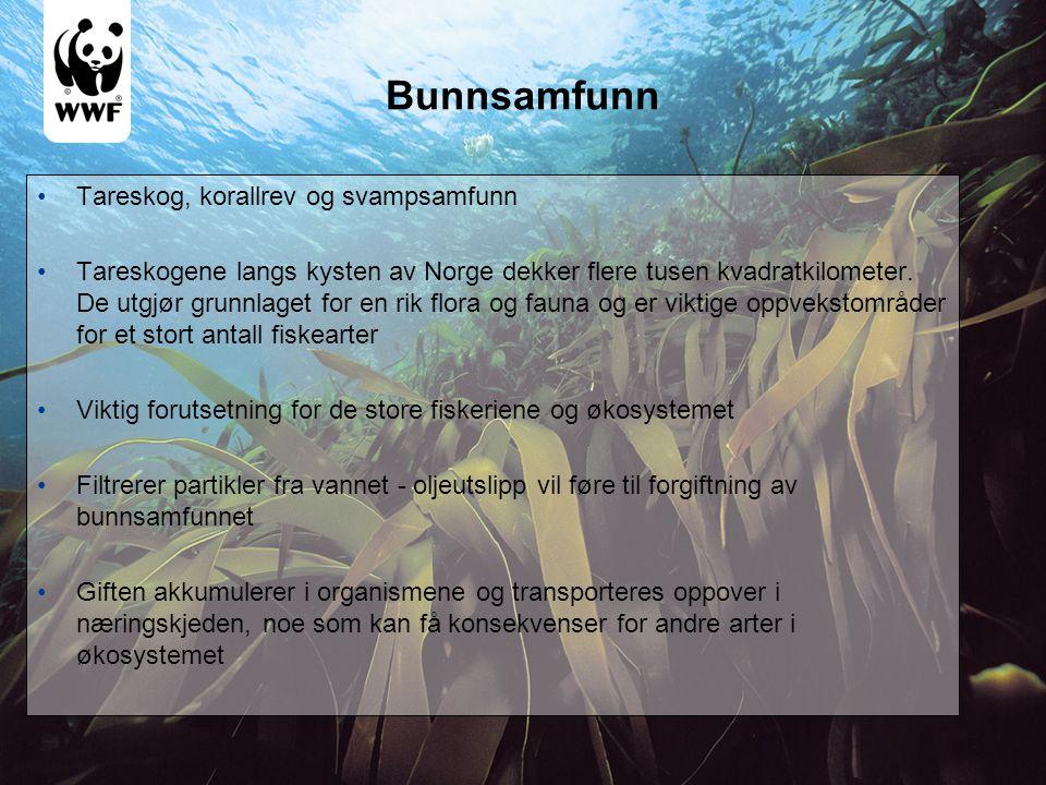 Bunnsamfunn Tareskog, korallrev og svampsamfunn