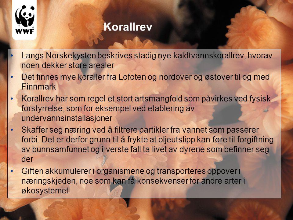 Korallrev Langs Norskekysten beskrives stadig nye kaldtvannskorallrev, hvorav noen dekker store arealer.