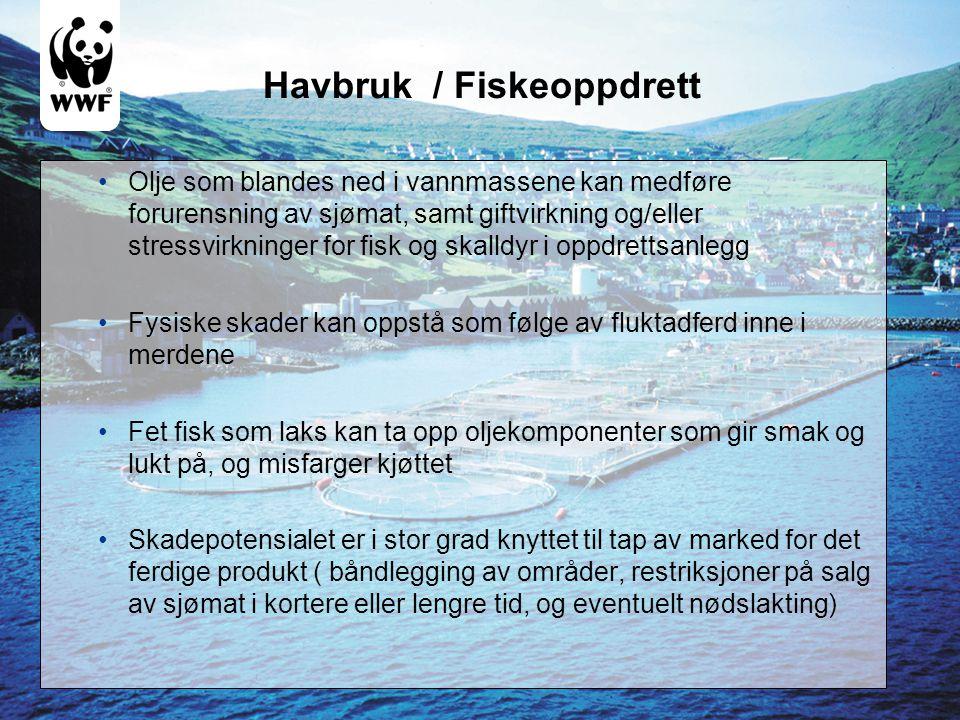 Havbruk / Fiskeoppdrett