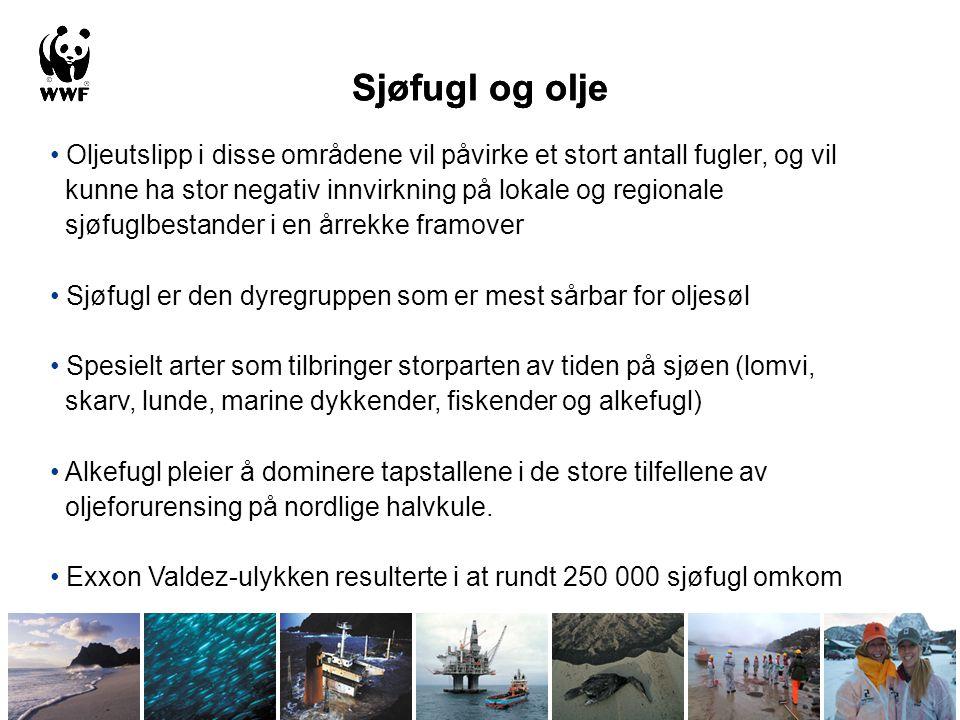 Sjøfugl og olje Sjøfugl og olje