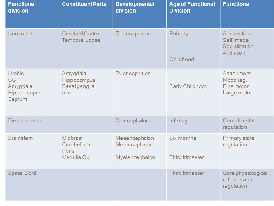 Functional division Constituent Parts. Developmental division. Age of Functional Division. Functions.