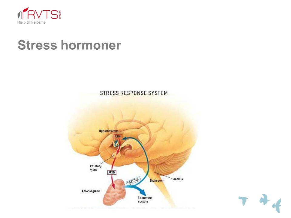 Stress hormoner