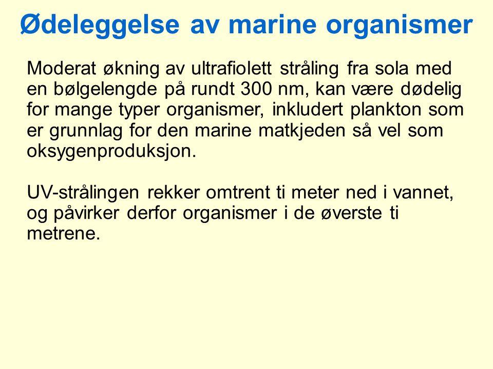 Ødeleggelse av marine organismer