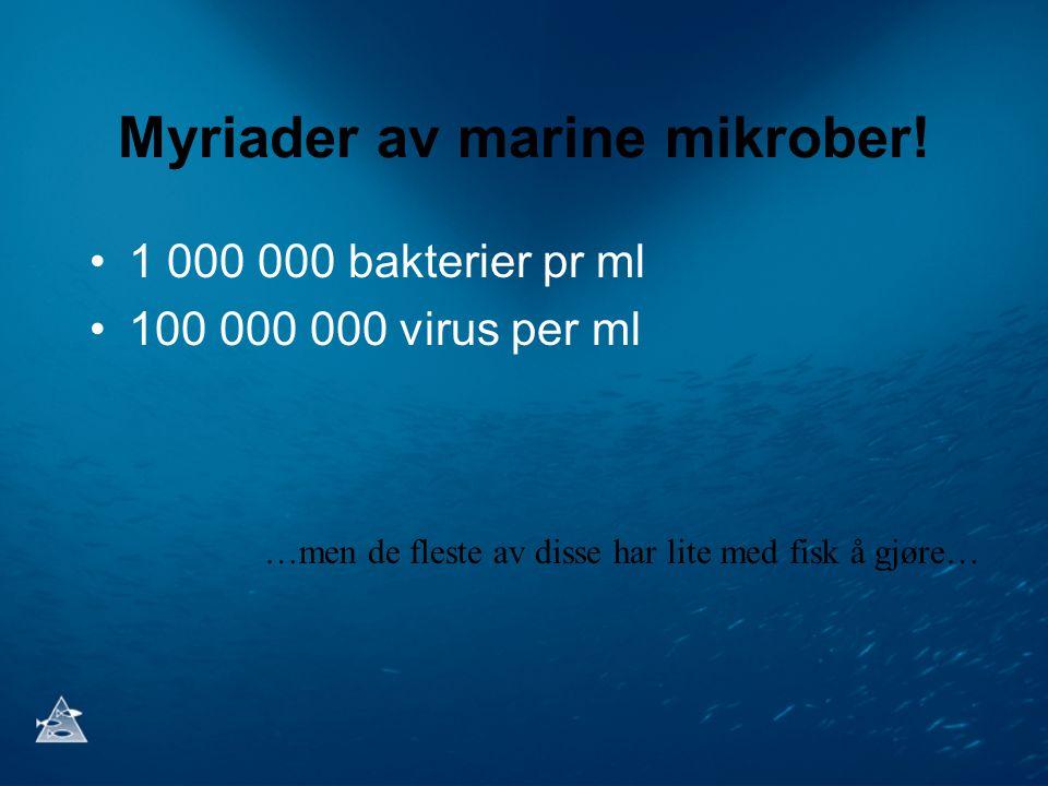 Myriader av marine mikrober!